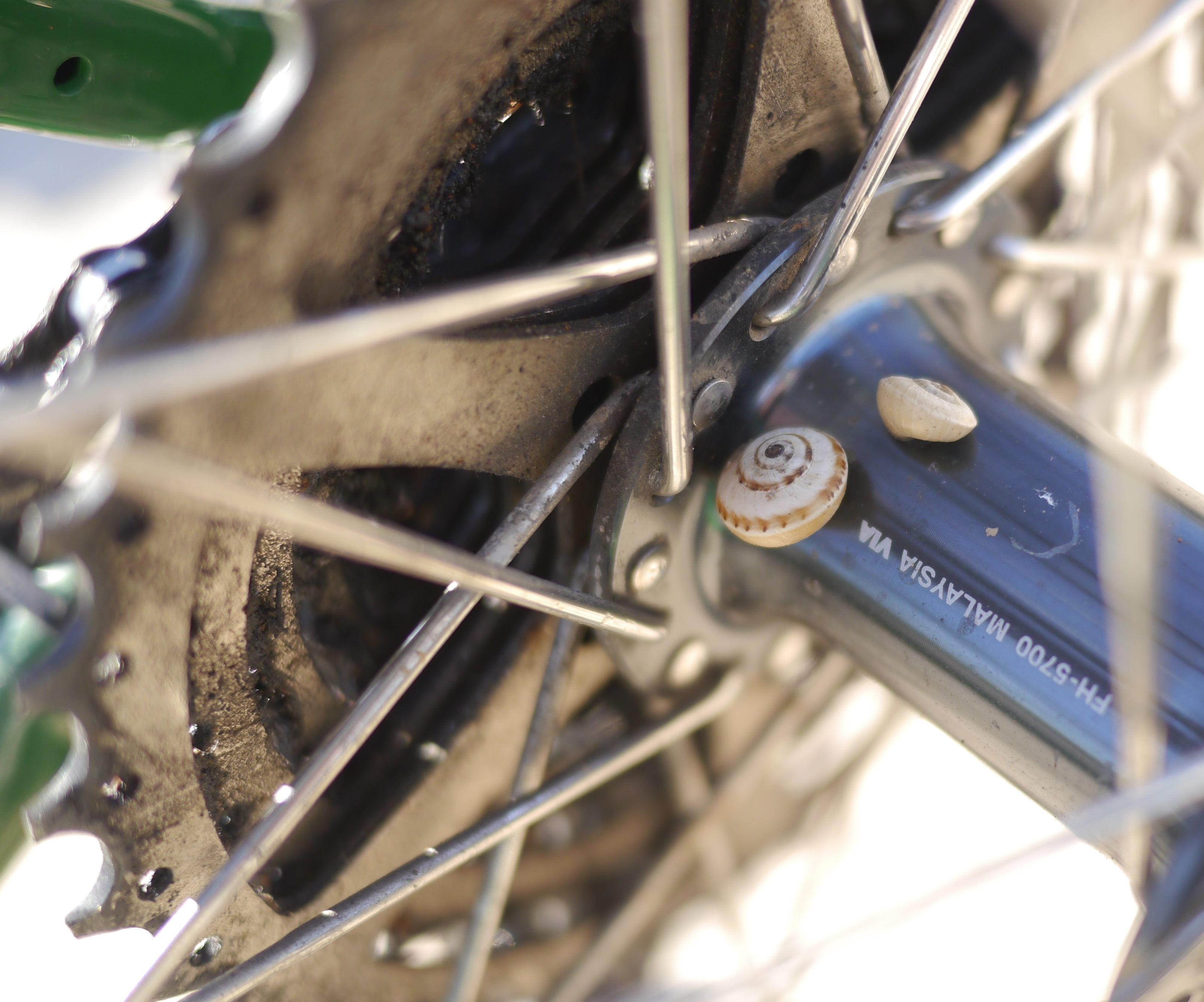 Snails on bicycle hub