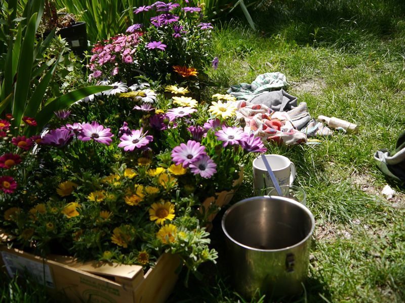 flowers for planting at Beneficio Spain